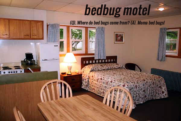 Rooms To Go Bed Bugs
